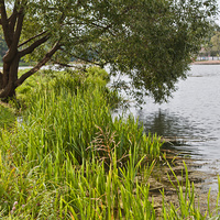 Колонистский пруд