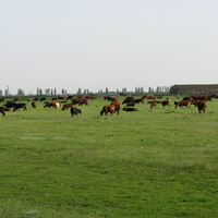 Пасовисько