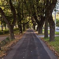 Аллея на проспекте Ленина