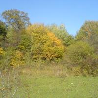 Осенние краски надежненского леса
