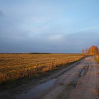 Дорога в поле у с. Сукромны. Октябрь 2011 г.