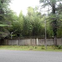 Бамбуковая роща на закрытой территории