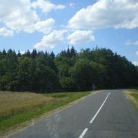 опушка леса у деревни Дорогая
