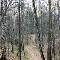 Зюзинский лес