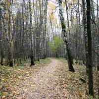 Дорожки в осеннем лесу