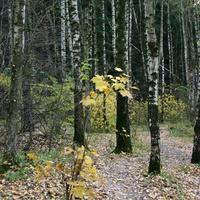 Урочище Зюзинский лес