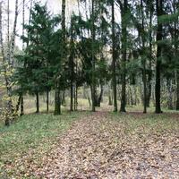 Зюзтнский лес