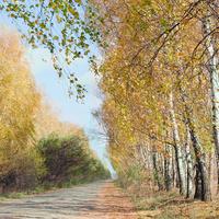 Осіння дорога