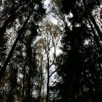 Макушки деревьев