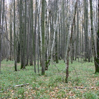 Зюзенский лес