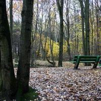 Пруд в осеннем лесу