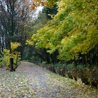 Осенняя пора в Зюзино