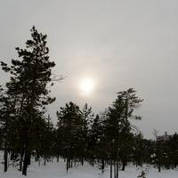 Югра. Западная Сибирь. Март. Метлёнги. Саранпаульское поселение