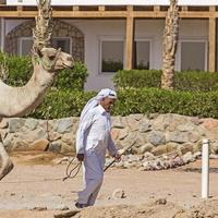 Старый бедуин и его верблюд