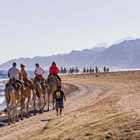 Ближе к обеду паломники со всего мира начинают стекаться в Blue Hole. Кто на верблюдах, кто на машинах.