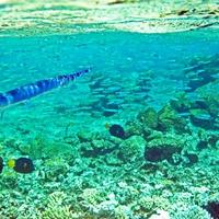 Сарган пасет косяк мелкой рыбешки