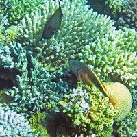 Сад кораллов