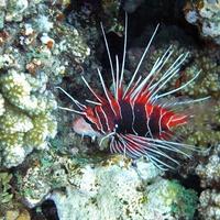 Подводные жители коралловых садов