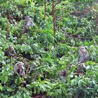 Остров обезьян /Monkey island/