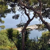 Монако, сад