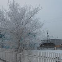 чудо  зимнее