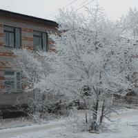 дерево здоровья у Онохойской поликлиники