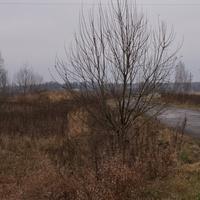 Дорога на Мясищево