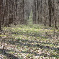 ліс поблизу Ясиноватки