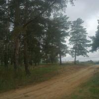 пучине архив фото волгоградской обл с кислово слегка прихваченные морозцем