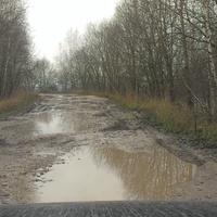 дорога в Гурьево