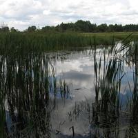 болотце перед деревней