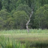 волосачевское болото