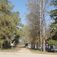 лиственничная аллея