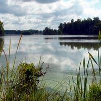 Утро у озера.