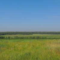 Лес у дачного участка
