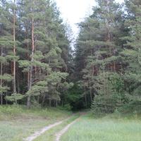 лес у села Солдатское