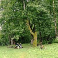 Skole Raion. Resting place next to the highway Lviv - Uzhhorod.