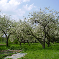 Фруктовий сад на території ПТУ в с. Погірці