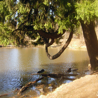 В Шуваловском парке