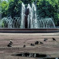 Сонные голуби у фонтана