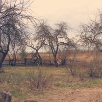 Яблыневы сад. Вясна 2014.