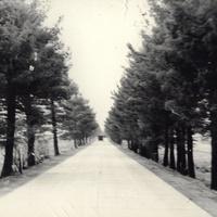 Перед Гератом. Дорога со стороны Шинданда