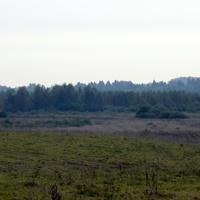 Урочище Дубаки вид на болото