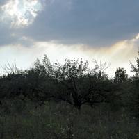 Заброшенный сад села Крапивное