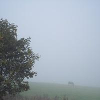 """""""Лошадь  в тумане"""""""