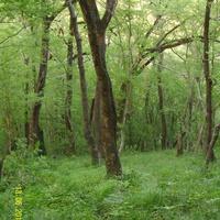 На холмах близ Лазаревского