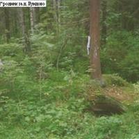 Лесной каменный родник за деревней Бундово