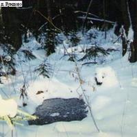 Лесной родник за деревней Бундово