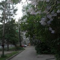 Во дворе домов по ул. Центральной