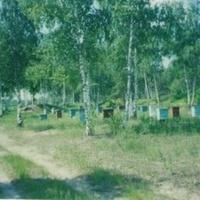 Пасека за посёлком Радовицкий Мох